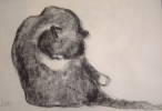 STUDY OF A CAT has been sold
