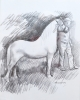 WHITE STALLION, Price: £1400.00, Medium: Graphite