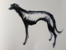 BLACK HOUND, Price: £380.00, Medium: OIL ON PAPER, Size: 30 X 40CMS