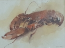 LOBSTER, Price: £850.00, Medium: Watercolour and Pastel, Size: 16X12ins